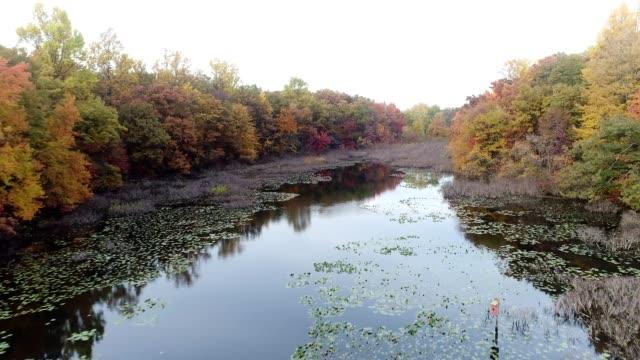 vídeos y material grabado en eventos de stock de vista panorámica del estanque pequeño con follaje de otoño en nueva jersey - pantano zona húmeda