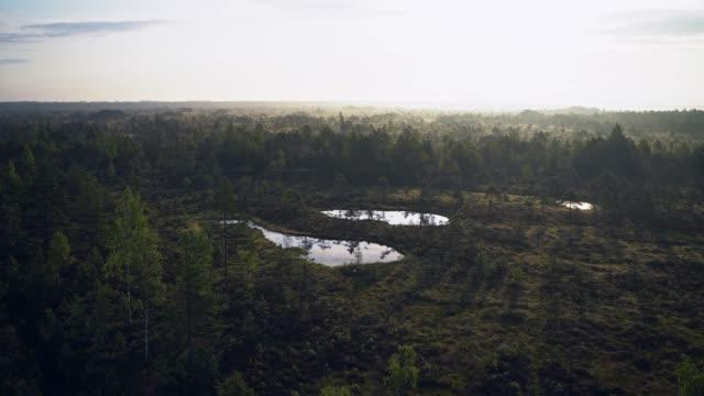scenic view of swamp in estonia - estonia stock videos & royalty-free footage