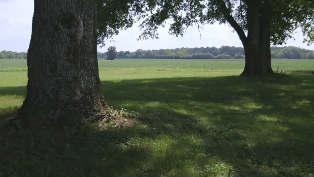 WS Scenic view of trees and grassy field / Nashville, Tennessee, United States