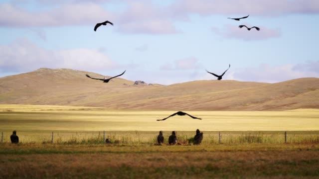 vídeos y material grabado en eventos de stock de vista panorámica del buitre en la estepa del desierto de gobi al atardecer - ave de rapiña