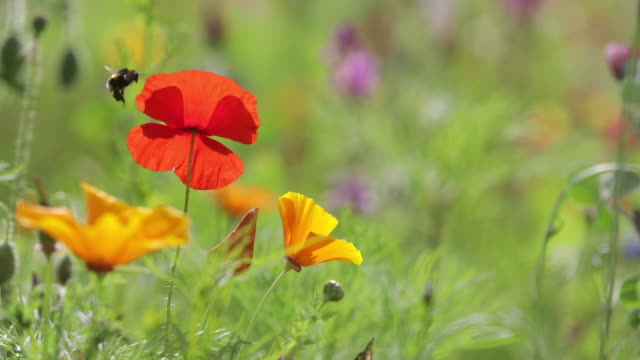 scenic view of wildflowers in meadow - growth stock videos & royalty-free footage