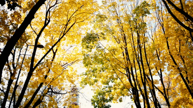 scenic view of yellow trees  in park in autumn - autumn stock videos & royalty-free footage