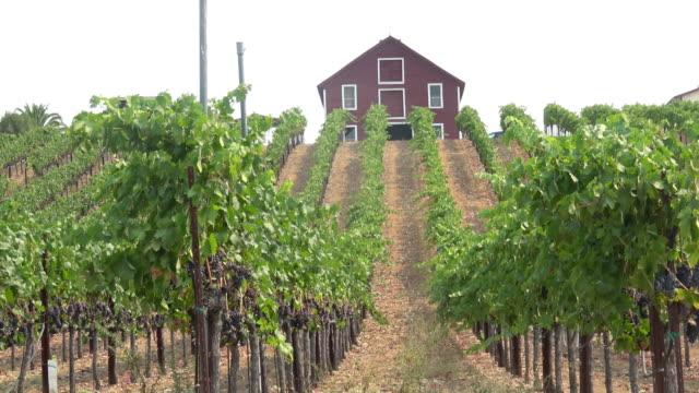 vídeos y material grabado en eventos de stock de paisaje pintoresco viñedo - uva cabernet sauvignon