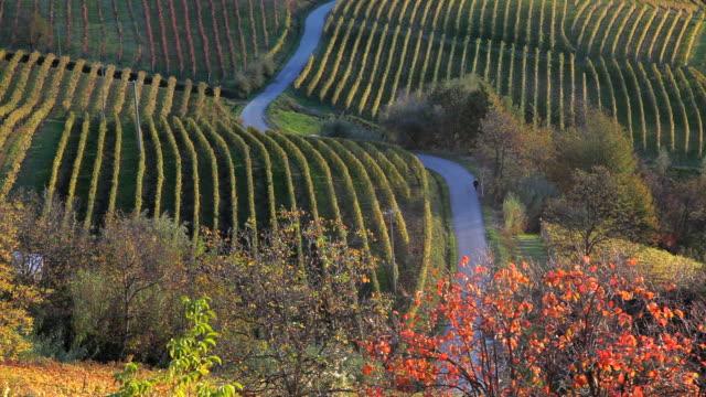 scenic vinyards, nr alba, langhe, nr piedmont, italy, europe - piemonte video stock e b–roll