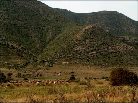 vídeos y material grabado en eventos de stock de scenic with sheep (ovis aries), cabo de gata, andalucia, spain - oveja merina