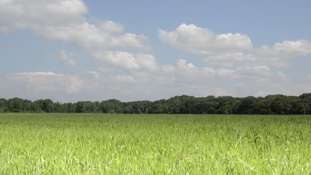 landschaftspanorama feld im frühjahr - crucifers stock-videos und b-roll-filmmaterial