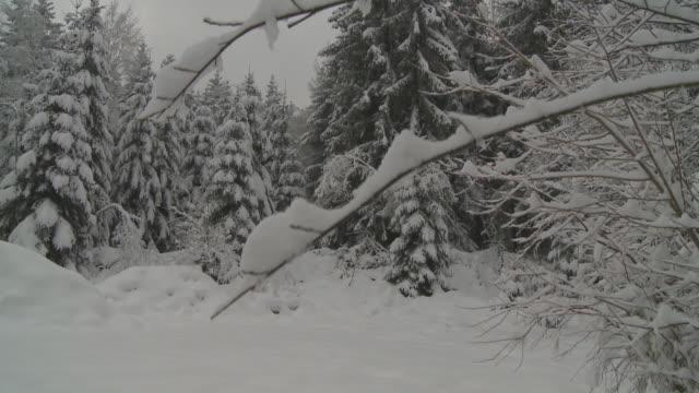 HD CRANE: schneebedeckter Winterwald