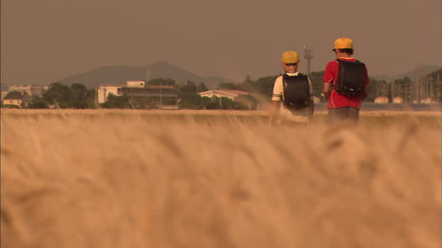 school children going home through barley fields at dusk - 郊外の風景点の映像素材/bロール