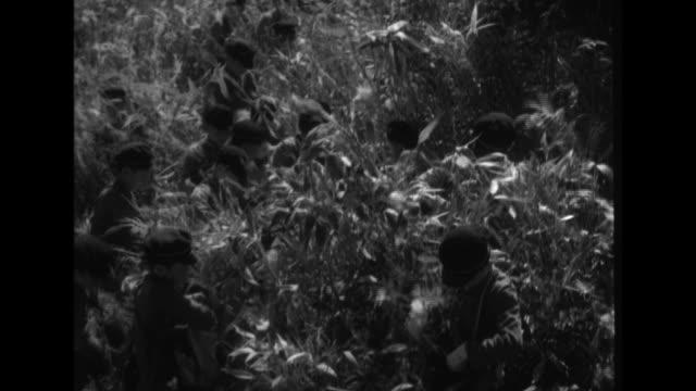 school children harvest sasa veitchii bamboo seeds in the shiga highlands minoru suzuki nagano governor inspects the sasa veitchii seeds laid out in... - joshinetsu kogen national park stock videos and b-roll footage