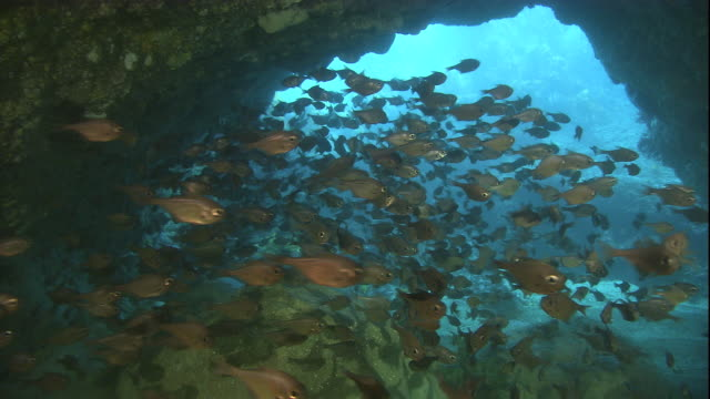 a school of bigeyes swims through a marine cave. available in hd. - seabed stock videos & royalty-free footage
