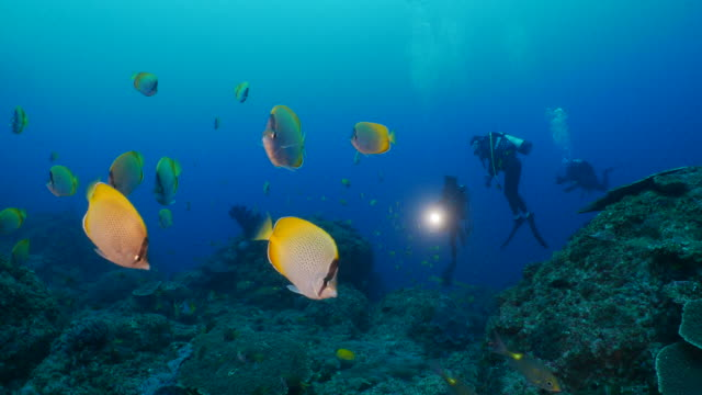 school of crotchet butterflyfish (chaetodon guentheri) in coral reef, japan - butterflyfish stock videos & royalty-free footage