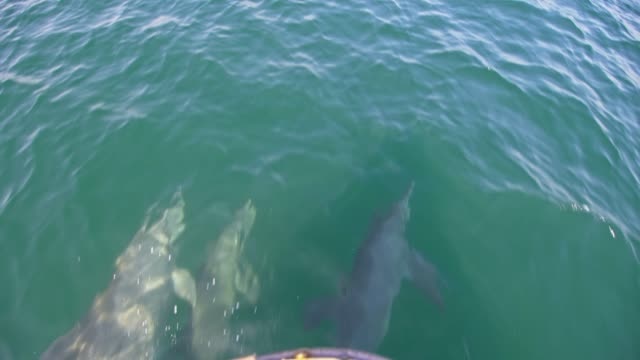 slo mo school of dolphins swimming in front of a boat - bay of water stock videos & royalty-free footage