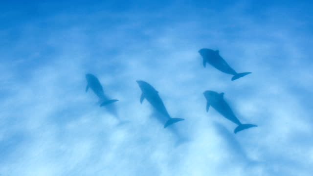 school of dolphins - undersea stock videos & royalty-free footage