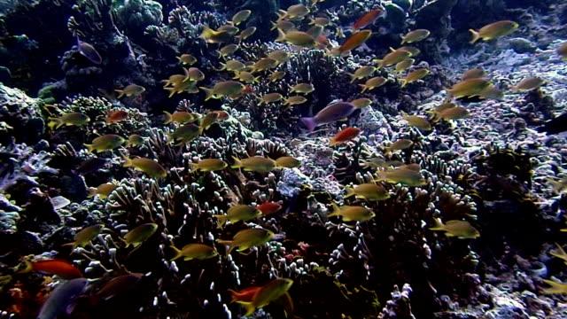 vídeos de stock e filmes b-roll de school of fish and colorful coral - coral macio