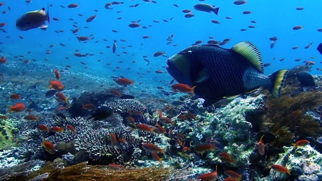 school of fish and colorful coral