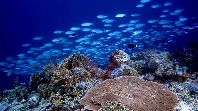 school of fish and colorful coral - diving flipper stock videos & royalty-free footage