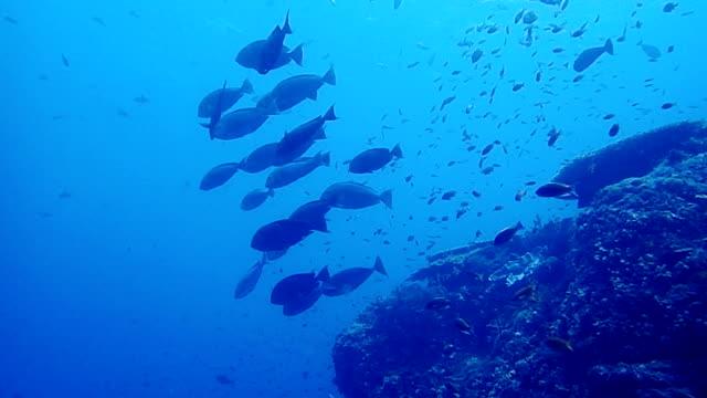 school van vis en kleurrijke koraal