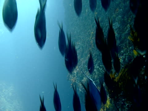 a school of fish glides over a coral shelf. - ecosystem stock videos & royalty-free footage