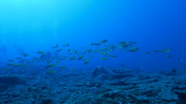 schule der fische im korallenriff - meerbarbe stock-videos und b-roll-filmmaterial