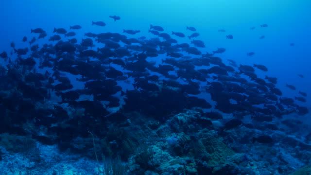 École de poissons de récif corallien