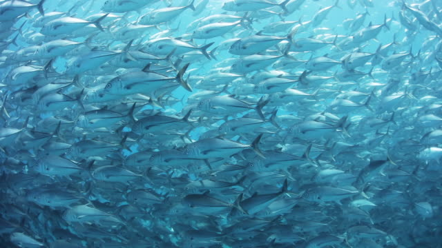 School of fish in Mexico, POV