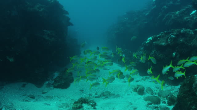 school of fish in reef tunnel - island stock videos and b-roll footage