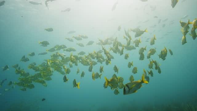 vídeos y material grabado en eventos de stock de school of fish in slow motion - playa del carmen