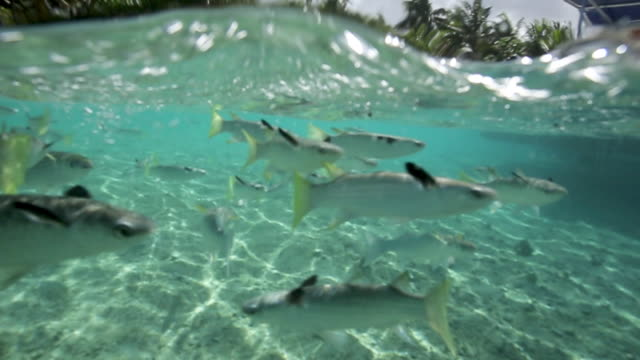 school of fish in tropical reef, underwater point of view - water's edge stock videos & royalty-free footage