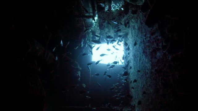 vidéos et rushes de ms school of fish inside a shipwreck - hublot