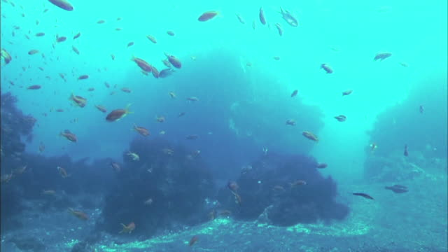 School Of Fish Swimming Around Corals