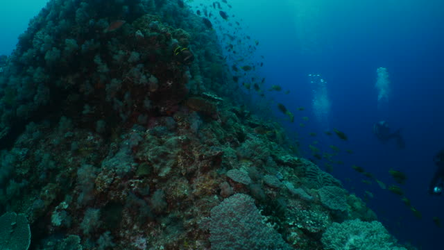 school of fish swimming at undersea coral reef in japan - aqualung diving equipment stock videos & royalty-free footage