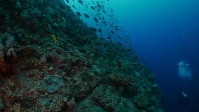 school of fish simning på undervattens höjd pinnacle i japan - dykarperspektiv bildbanksvideor och videomaterial från bakom kulisserna