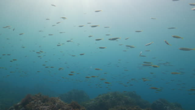 School of fish swimming in the reef