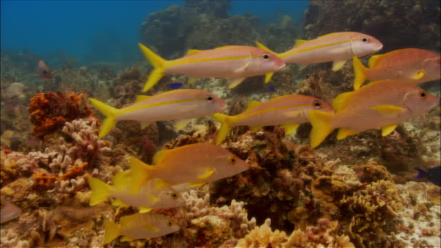 school of fish swimming over coral / cozumel, mexico - cozumel stock videos and b-roll footage