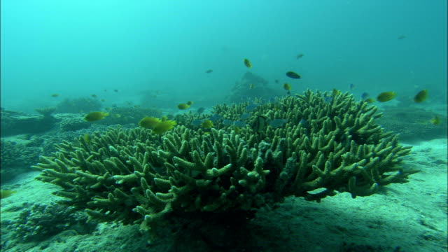 a school of fish swims among staghorn coral. - hard coral stock videos & royalty-free footage