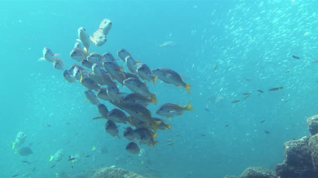 A school of fish swims in a little group.