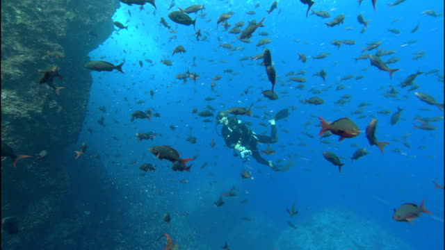 a school of fish swims near a coral ledge where a diver swims past. - scuba diving stock videos & royalty-free footage