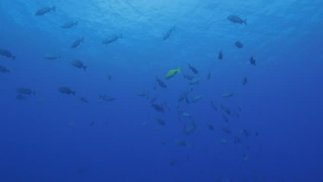 fiskstim undervattenskablar - dykarperspektiv bildbanksvideor och videomaterial från bakom kulisserna