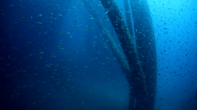 stockvideo's en b-roll-footage met school of fish underwater near oil rig - olie industrie