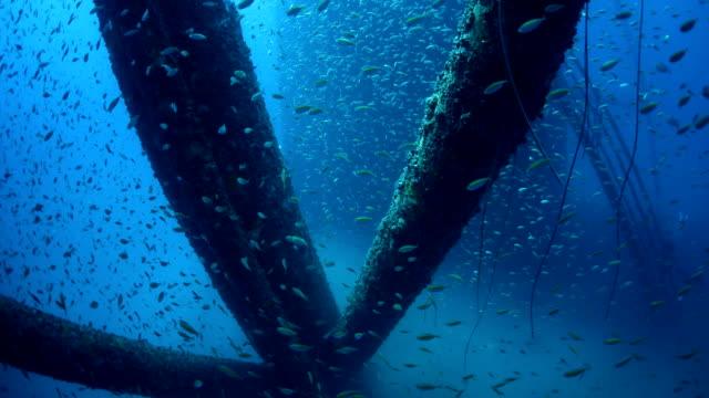 School of fish underwater oil rig