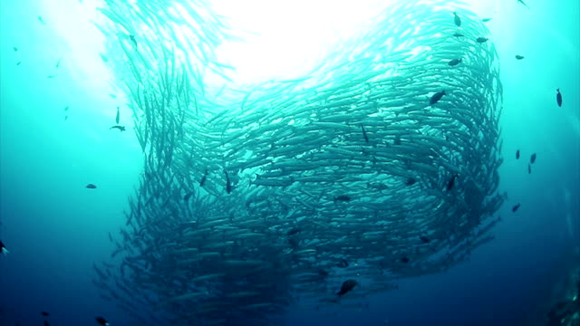 school of fish - large group of animals stock videos & royalty-free footage