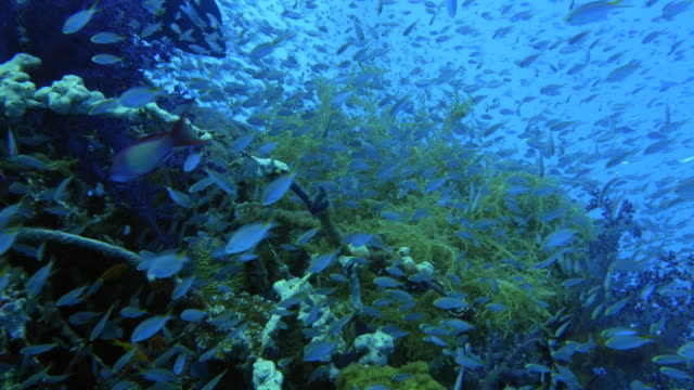 school of glass fish and coral reef - glass fish stock videos & royalty-free footage