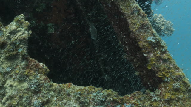 school of glass fish inside the undersea shipwreck in japan - glass fish stock videos & royalty-free footage