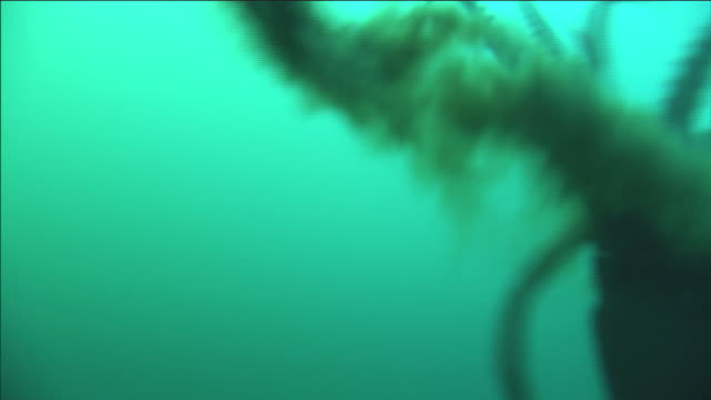a school of humboldt squid swims underwater. - squid stock videos & royalty-free footage