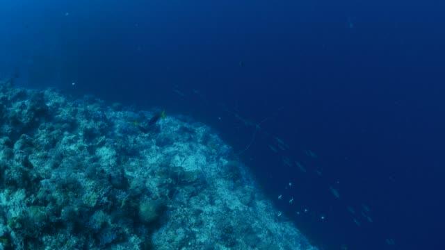 Schule der Fische Jagd Köder Raubfische