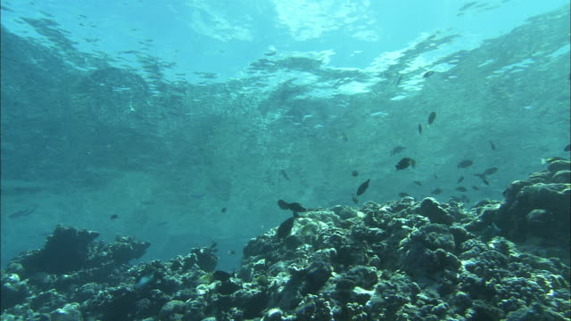 a school of small fish swim in shallow ocean water. - ocean floor stock videos & royalty-free footage