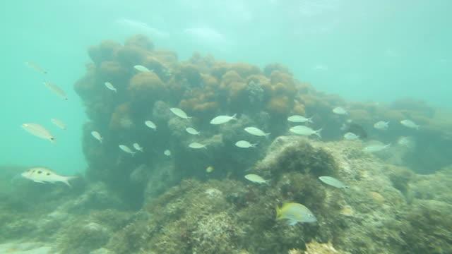 vídeos de stock, filmes e b-roll de a school of tiny blue fish swims around corals. - cardume de peixes