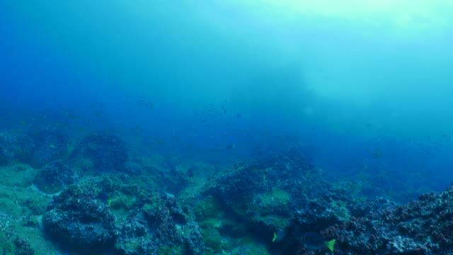 schule des kleinen fisches paarungs- und laichzeit undersea, galapagos - koralle nesseltier stock-videos und b-roll-filmmaterial