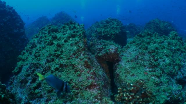 サンゴ礁、ガラパゴスで熱帯海水魚の学校 - チャールズ・ダーウィン点の映像素材/bロール