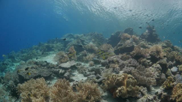 school of yellow goatfish, coral reef - goatfish stock videos & royalty-free footage